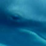 イルカと目が合う